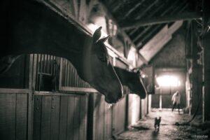 pferdestall-videoüberwachung